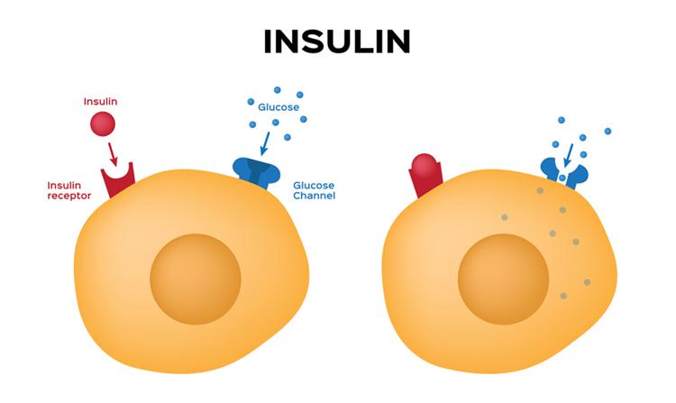 du-thua-insulin
